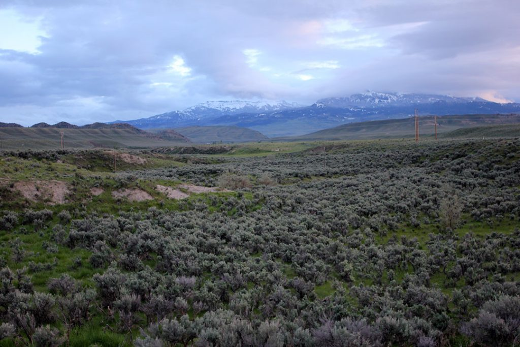 The sagebrush-steppe environment near Cody, Wyoming, home to numerous golden eagles. C.R. Preston photo.