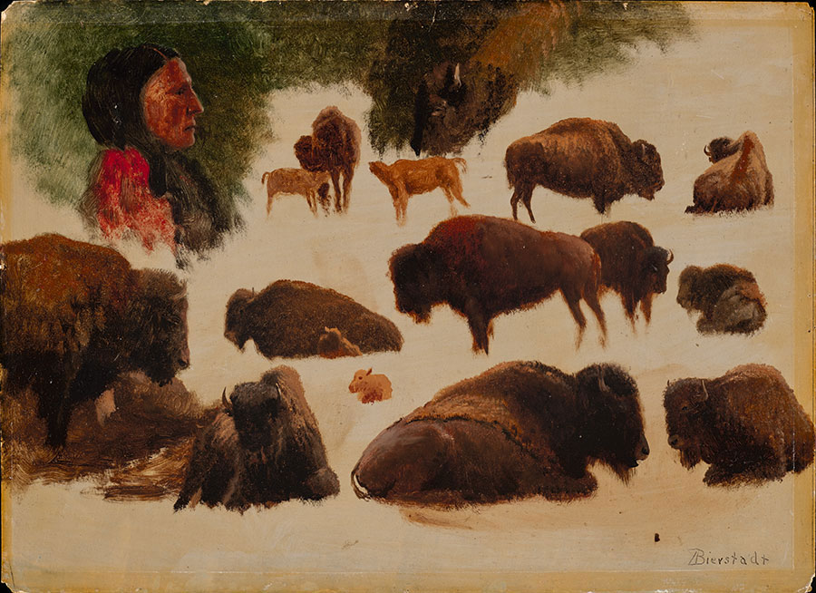"""Fig. 8, """"Studies of Bison,"""" ca. 1859. Oil on paper. Gilcrease Museum, Tulsa, Oklahoma. Gift of the Thomas Gilcrease Foundation, 1955. 0126.25"""