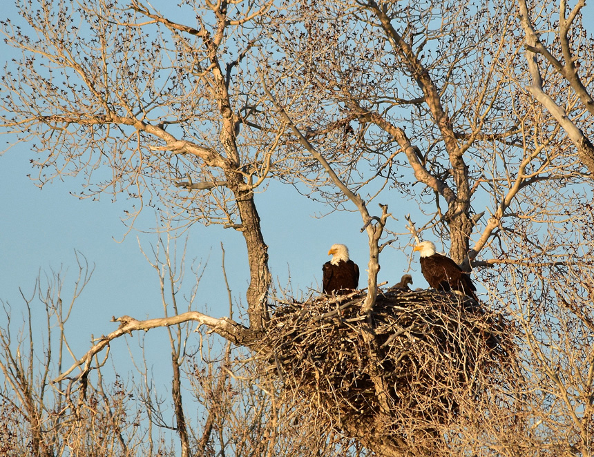 A bald eagle nest located in Seedskadee National Wildlife Refuge.