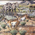Museum Minute: The American Cheetah