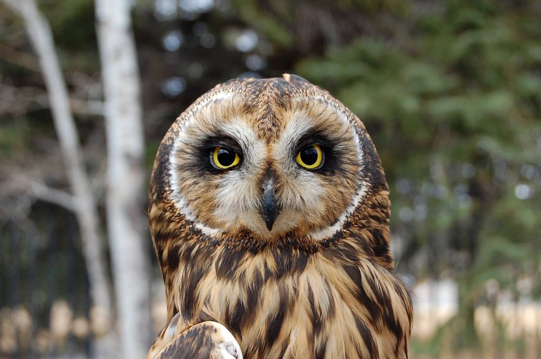 Owls In the Native American Culture - Buffalo Bill Center of