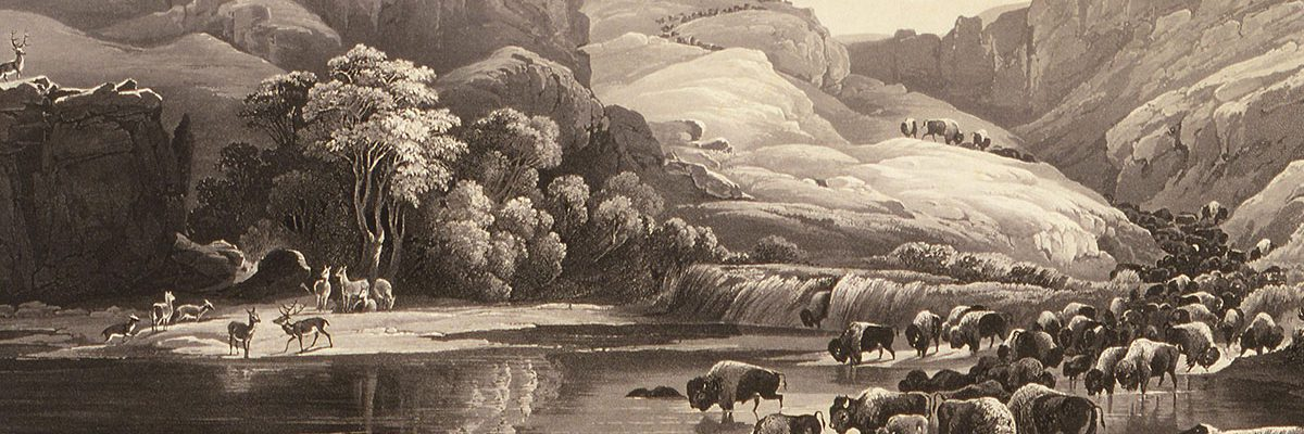 After Karl Bodmer, Herds of Bisons and Elks, 1840. Aquatint. Buffalo Bill Center of the West, Cody, WY. Gift of Clara S. Peck, 21.69.47