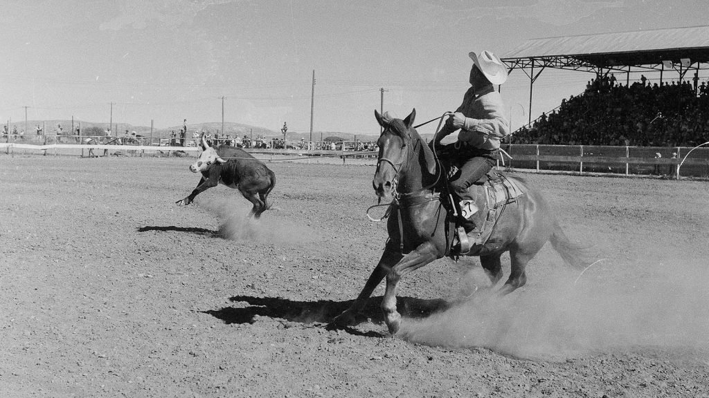 Cowboys heading and heeling steer at Stampede Rodeo, July 4, 1957. MS 089 Jack Richard Photograph Collection, McCracken Research Library. PN.89.17.2972a.03.22