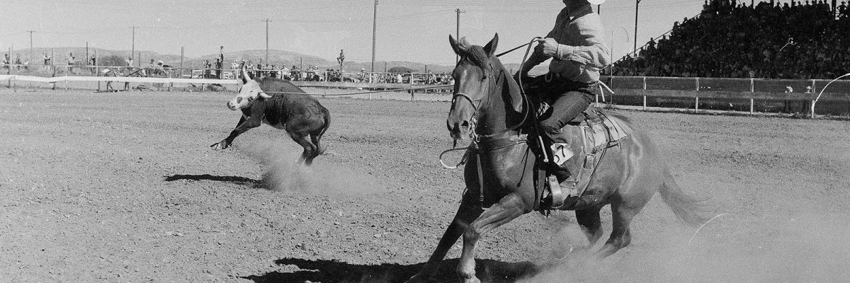 Cowboy heading a steer at Stampede Rodeo, July 4, 1957. MS 089 Jack Richard Photograph Collection. PN.89.17.2972a.03.22