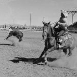 Cowboys heading and heeling steer at Stampede Rodeo, July 4, 1957. MS 089 Jack Richard Photograph Collection. PN.89.17.2972a.03.22