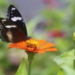 Birds & Butterflies – for kids 4–5 – June 20–21, 2019