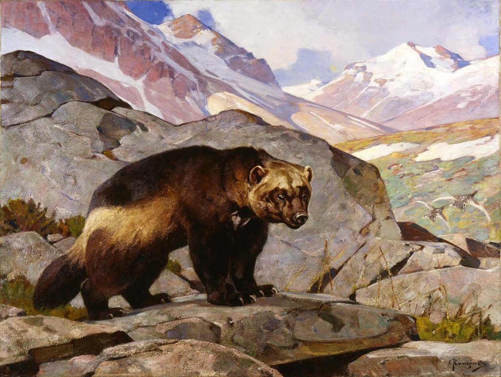 Carl Rungius (1869-1959). Wolverine in a Rocky Mountain Landscape, Alberta, 1919. Oil on canvas, 33.858 x 44.094 inches. Gift of Jackson Hole Preserve, Inc. 16.93.3