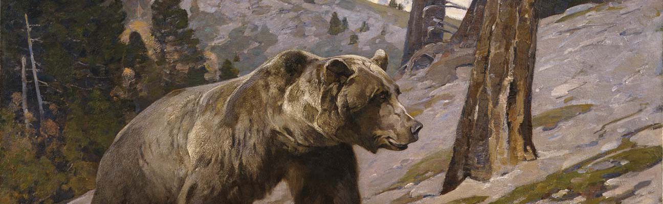 Carl Rungius (1869-1959). Silver Tip Grizzly Bear, Rocky Mountains, Alberta, ca. 1923. Oil on canvas, 60 x 75.125 inches. Gift of Jackson Hole Preserve, Inc. 16.93.4