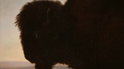 Albert Bierstadt (1830–1902). A Bull Buffalo, 1879. Oil on paper, 13.25 x 15.25 inches. Gift of Carman H. Messmore. 1.62