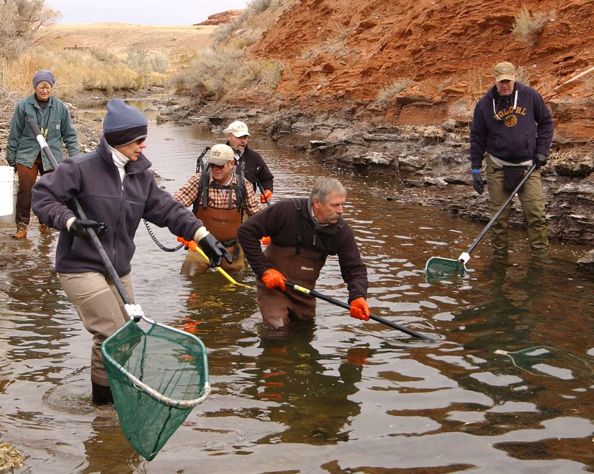 Dave Sweet, second from right, and other volunteers with Trout Unlimited use an electric stun wand and nets to rescue trout trapped in irrigation ditches near Cody, Wyoming. PointsWest photo/Ruffin Prevost.