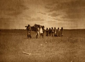 """""""Bringing the Cedar - Arikara."""" Photogravure facing page 82, from Edward S. Curtis' The North American Indian, Vol. 5, 1909. Call number RB TR647.C87 1909. McCracken Research Library."""