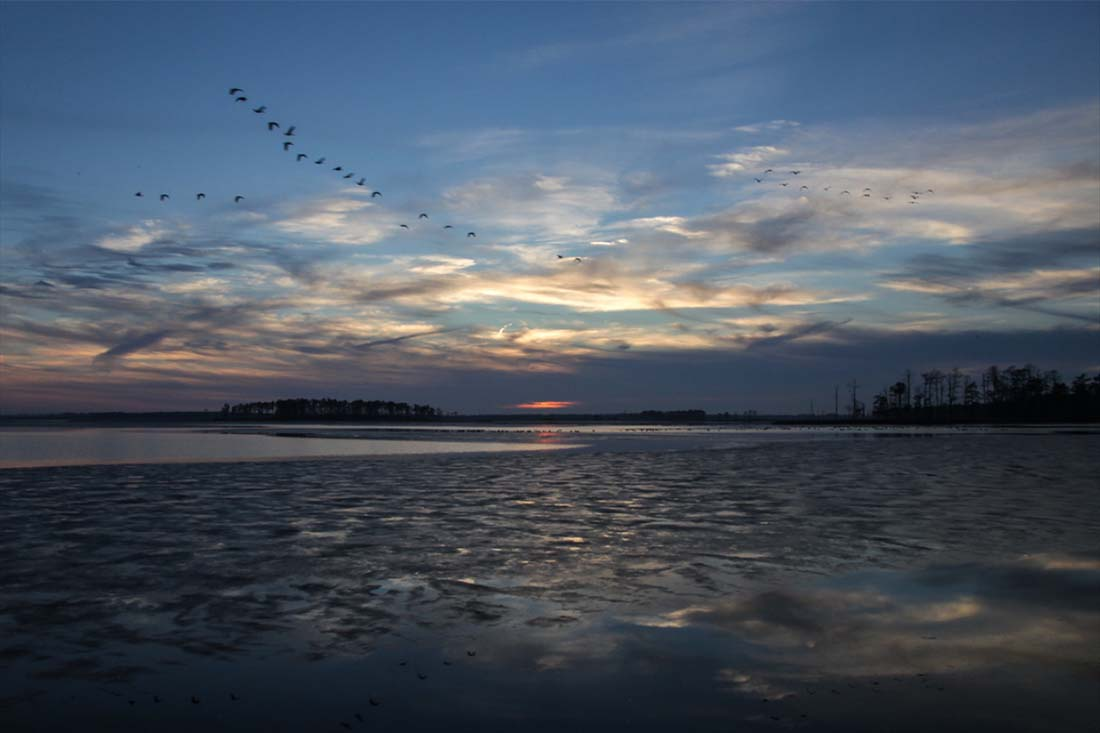 Evening scene with geese in a V-formation passing over a bay in the Blackwater National Wildlife Refuge, Dorchester County, MD.