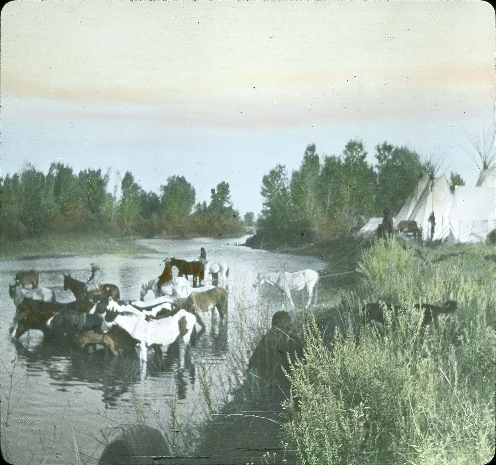 Horses and tipis at the Little Bighorn River. Lantern slide. MS 95 William A. Petzoldt Collection, McCracken Research Library. LS.95.289
