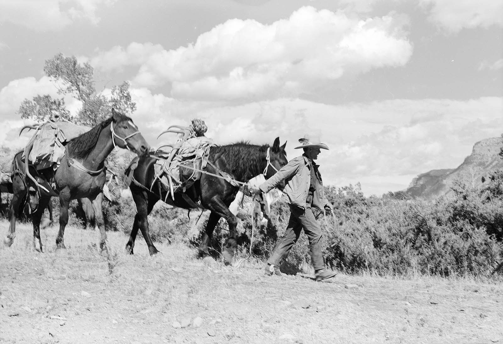 Anson Eddy leads a pack-string on the upper South Fork, ca. 1960. MS 089 Jack Richard Photograph Collection, McCracken Research Library. PN.89.27.4382.17