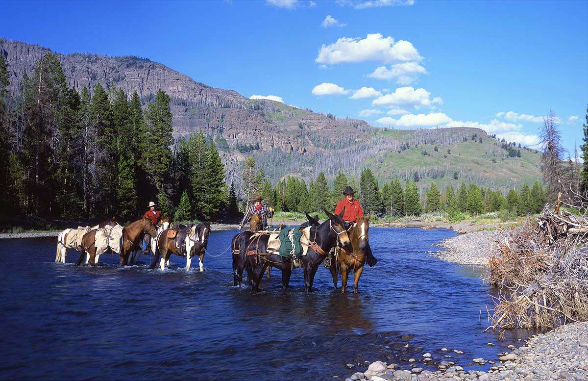 Some things change, but transportation remains the same in the Thorofare region. Here, a pack string of the Wyoming Game and Fish Department crosses Thorofare Creek in 2004. Note changes in the shape of the riverbank. (l. to r.) Mark Bruscino, Nathan Bender, and Tim Fagan. Sean Campbell photograph.
