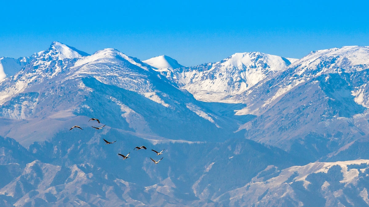 Tall snow covered mountains in central Asia with migrating birds in the foreground.