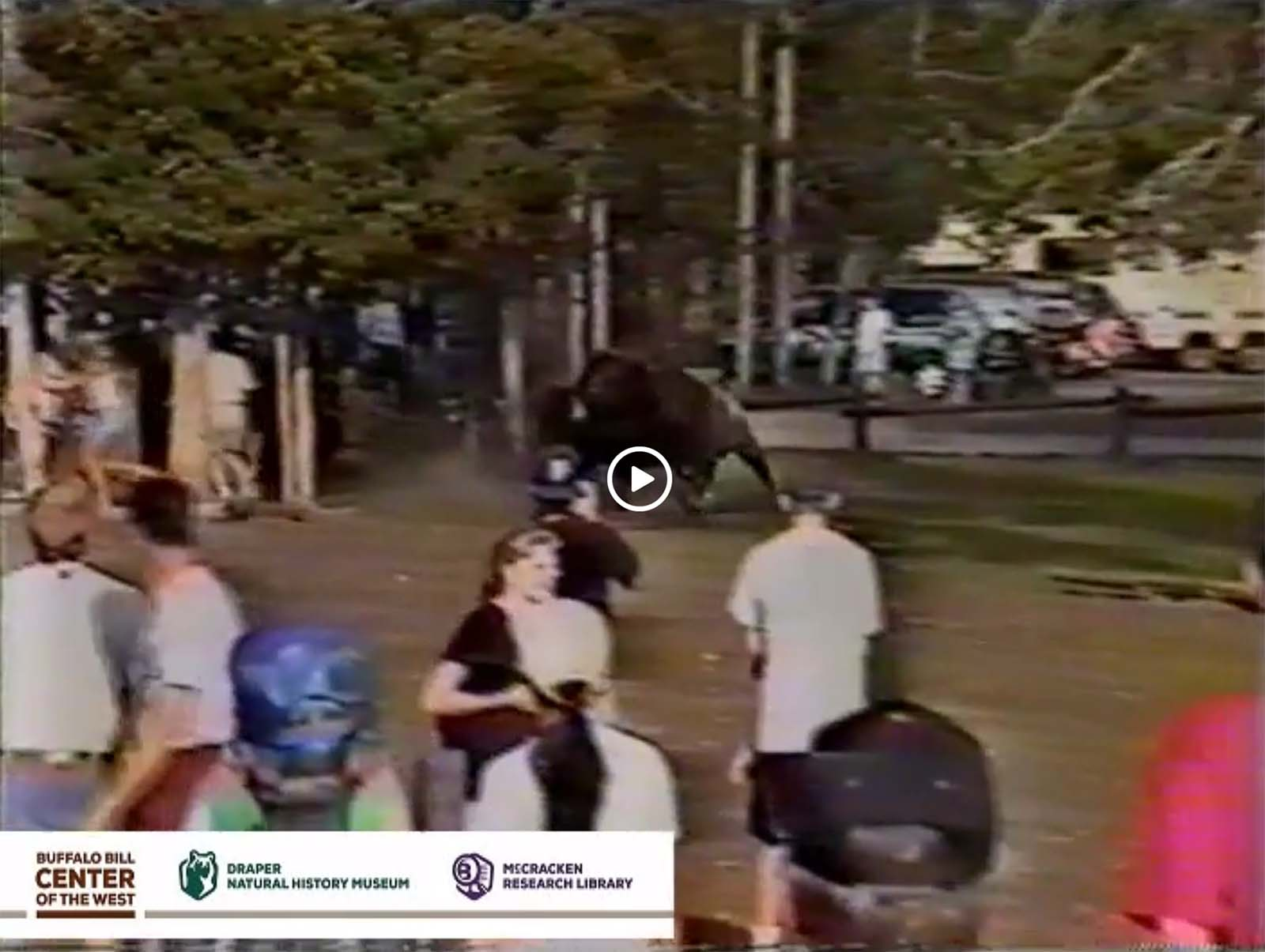 Video still of bison and a too-close crowd. Greater Yellowstone Sights and Sounds Archive. 430.177.003 / DRA501.177.3