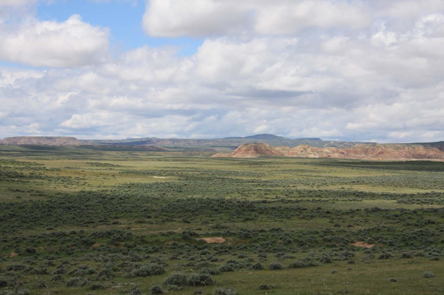 The still vast, virtually intact sagebrush-steppe ecosystem of Wyoming's Bighorn Basin remains a stronghold for the golden eagle and the Spirit of the American West. Photo by C.R. Preston.