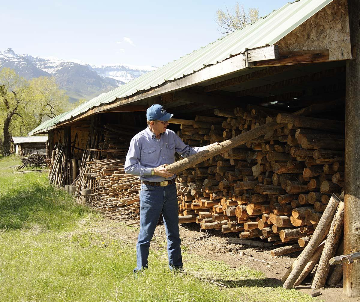 Ken Siggins choosing a log.