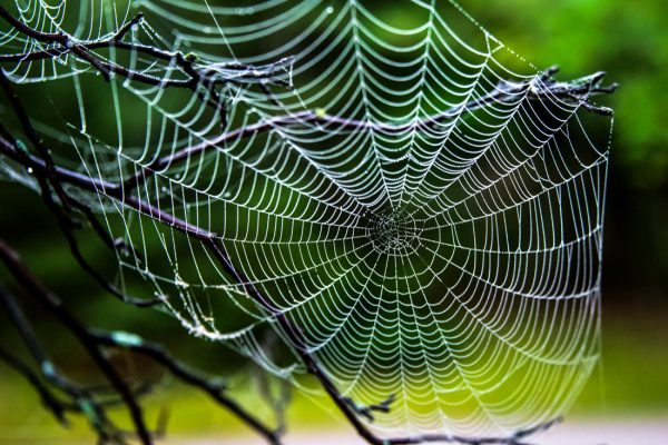 IntDemonstrates that spider webs are part of the topic..
