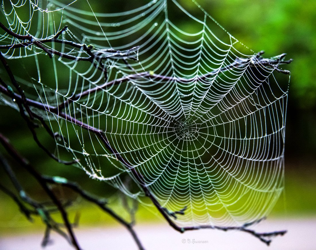 A large view of a spider web constructed between small branches to open a blog on spiders and their webs.
