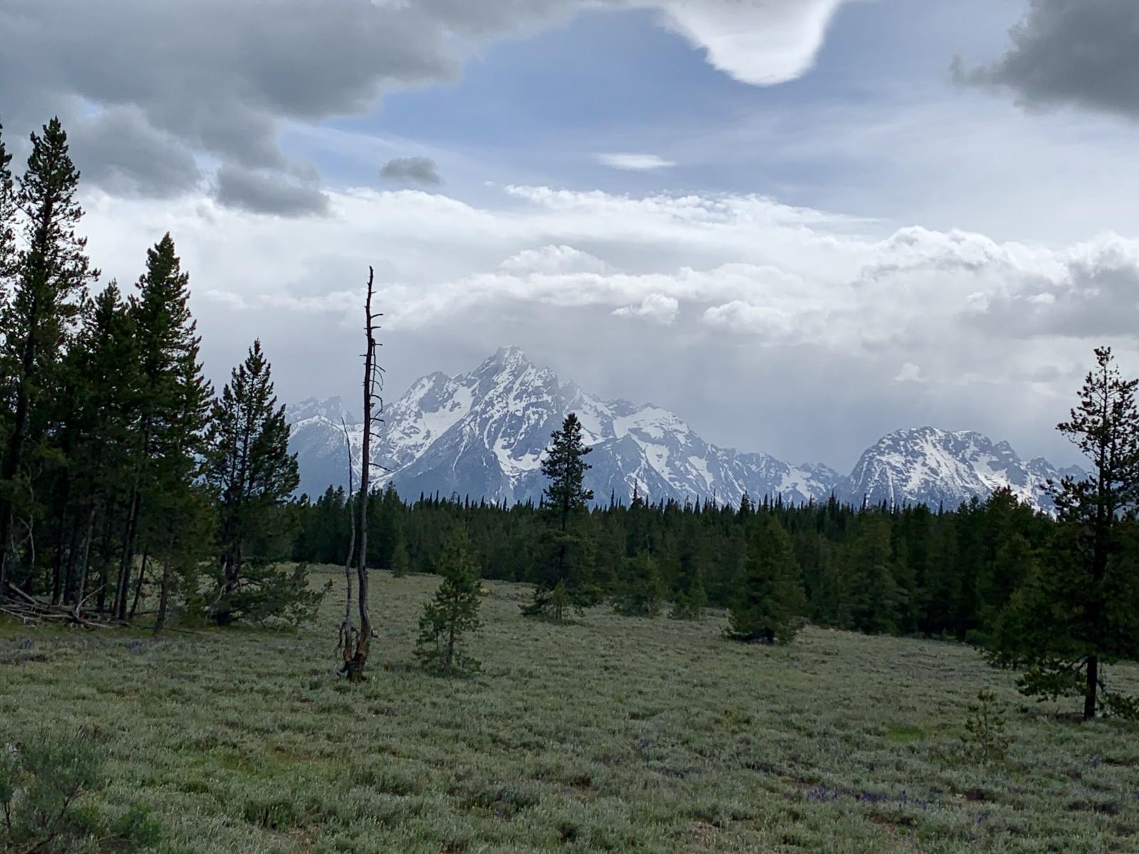 Grand Teton National Forest