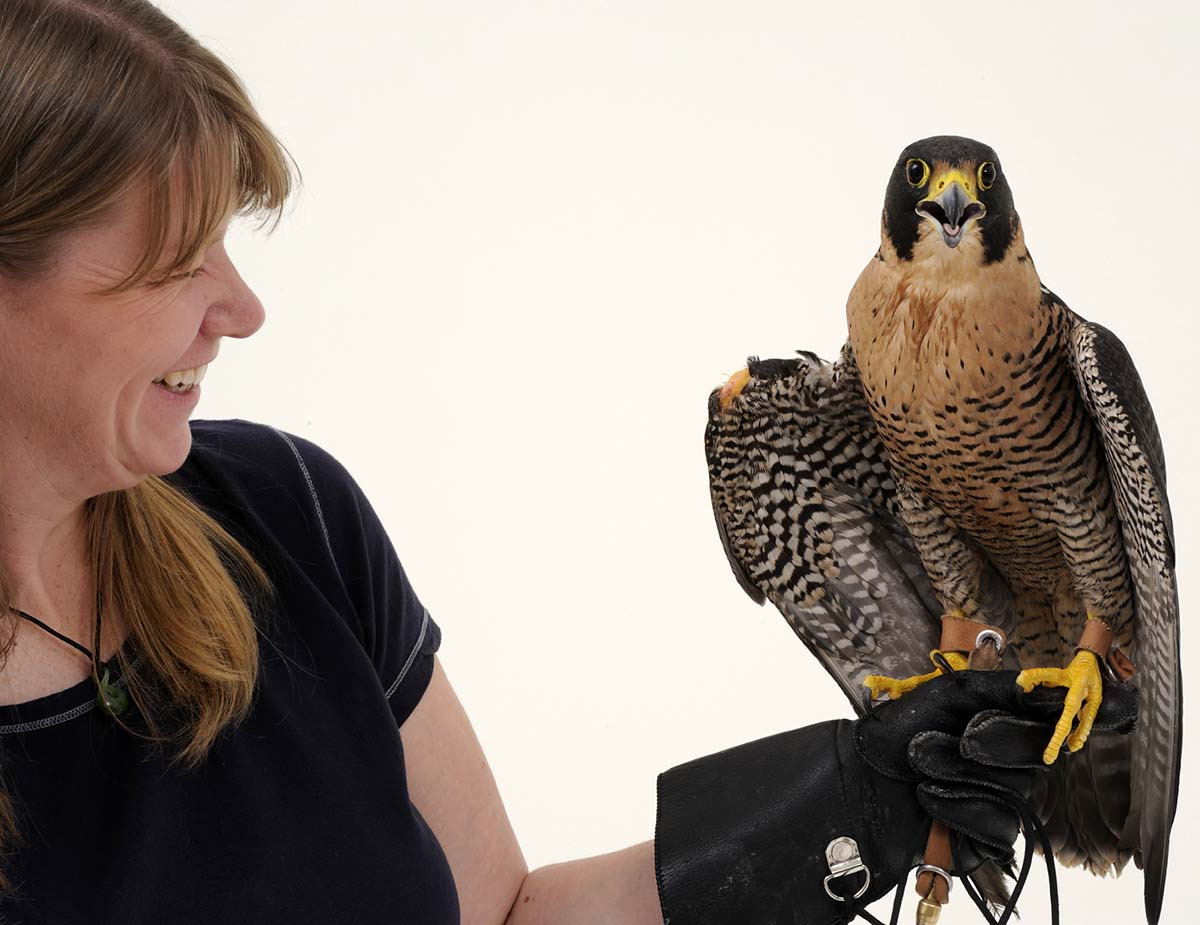 Melissa Hill and Peregrine Falcon Hayabusa