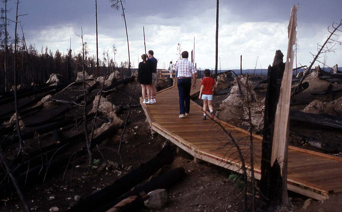 Visitors inspect Yellowstone fire damage at a massive blowdown on the road between Madison and Canyon Junctions. For some, the Park was destroyed; for others it was rebuilding. National Park Service photo by Jim Peaco, September 1988.