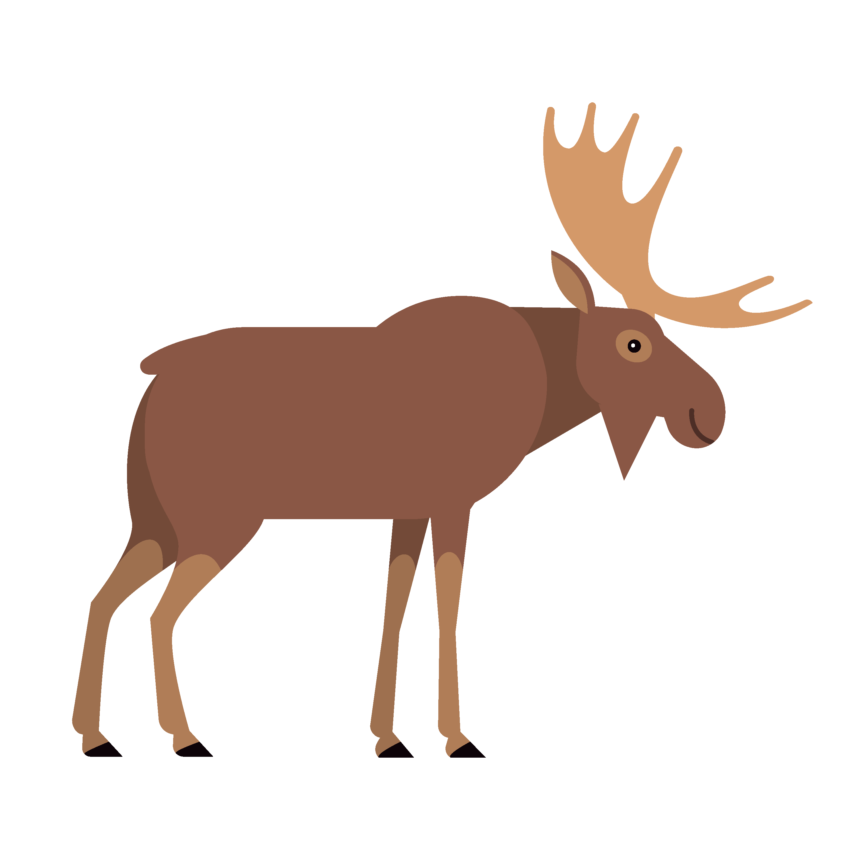 360 Adventure Moose