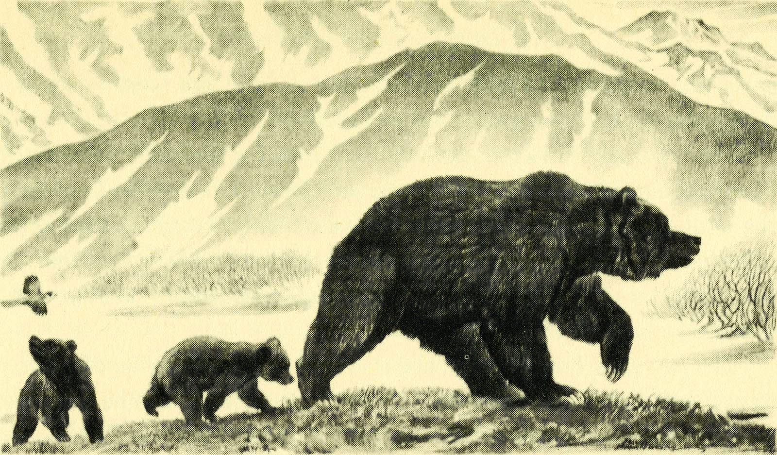 """Fig. 12: McCracken's bear family as depicted by the illustrator Paul Bransom in McCracken's book, """"The Biggest Bear on Earth"""" (Frederick A. Stokes Company, 1943)."""
