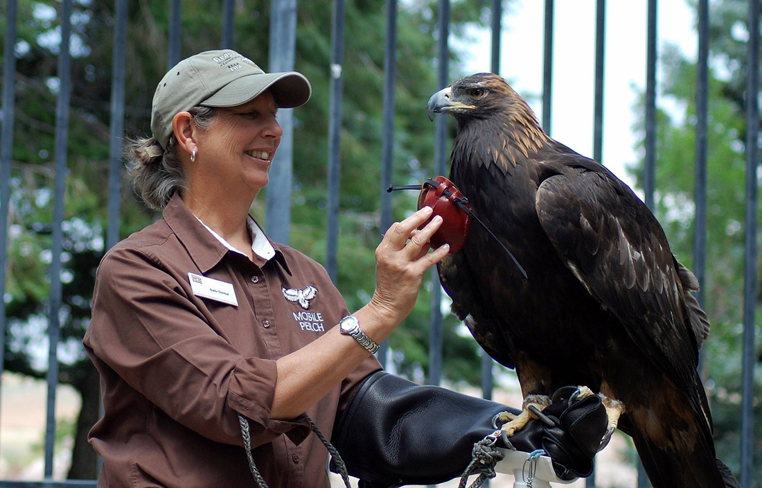 Handler Sally Disque with the DMRE's Golden Eagle, Kateri, on her  glove during a program.