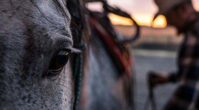Cowboy saddling horse. Adobe Stock image (detail)