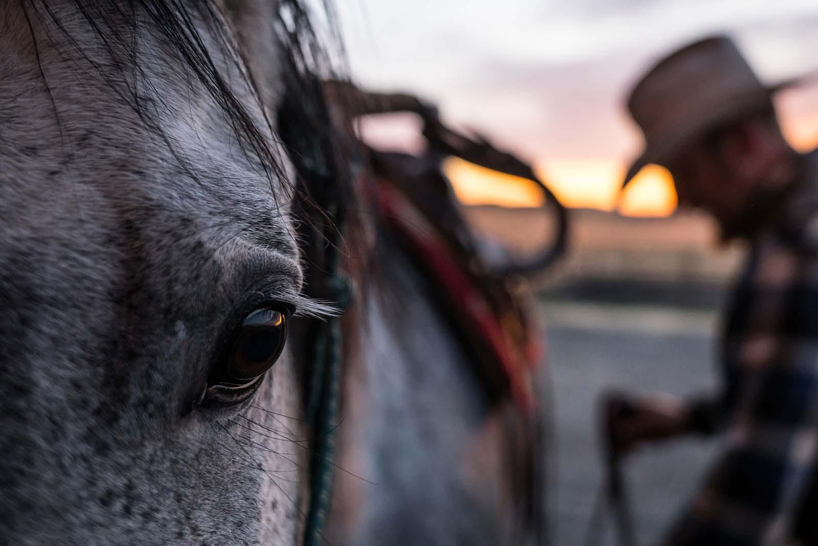 Cowboy saddling horse. Adobe Stock image.