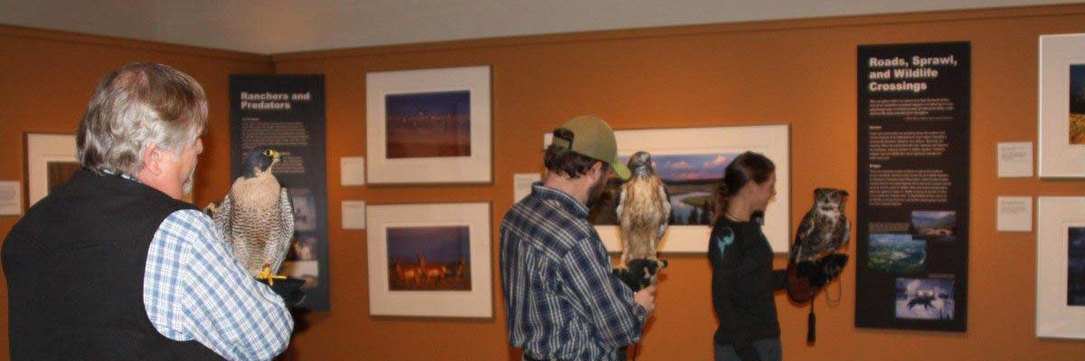 Draper Museum Raptor Experience volunteers with Hayabusa, Isham, and Teasdale at a public program.